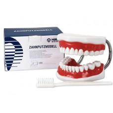 Toothbrushing Model